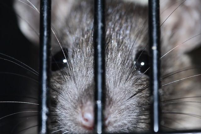 animaux de laboratoire